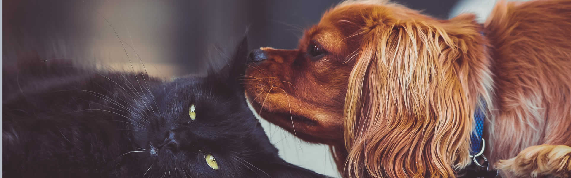 photo of a cat and a dog - do they have empathy?