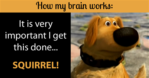 How my brain works It's important to get this done... SQUIRREL! (image of dog)