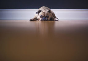 This dog shows a lack of motivation! Unsplash.com photo by Matthew Wiebe