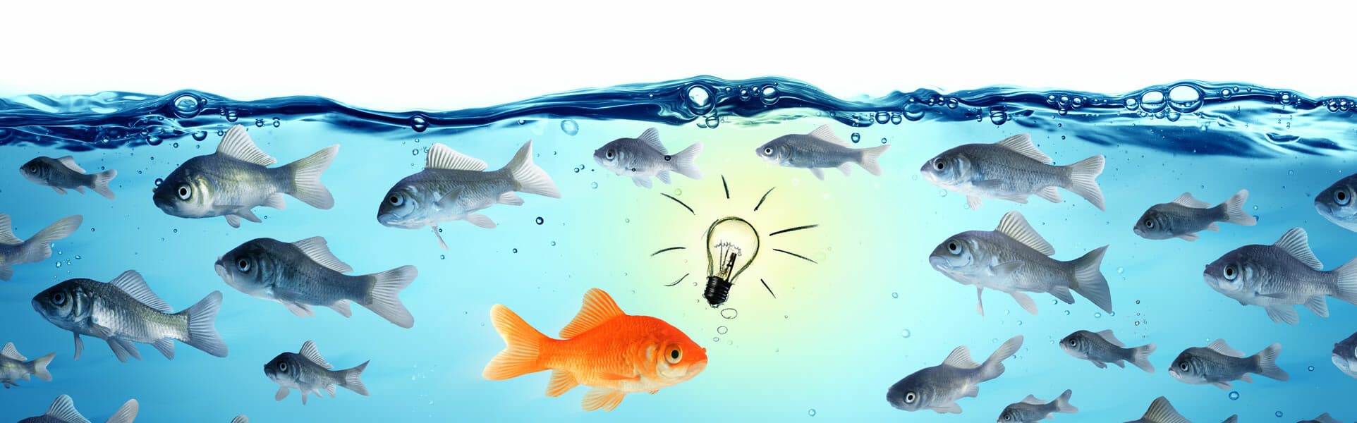 illustration of leadership concept with goldfish