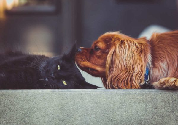 cats and dogs working together - empathy